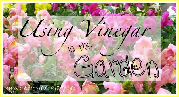 There are so many ways to use vinegar, including extending the life of cut flower, getting rid of deer & more | Ask Anna