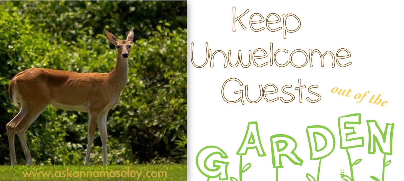 vinegar uses how to get rid of deer u0026 keeping flowers fresh ask