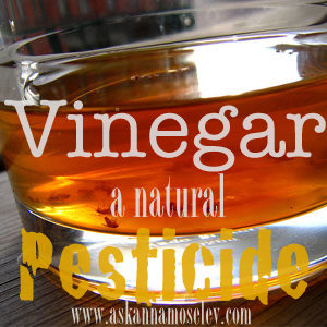 Vinegar Uses: Natural Pesticides