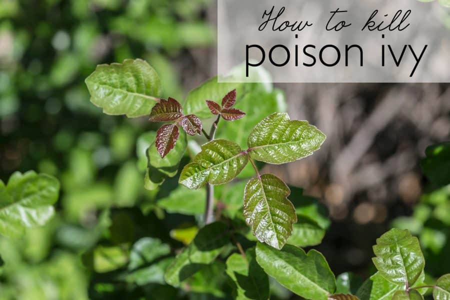 A quick and easy solution for how to kill pesky poison ivy | Ask Anna