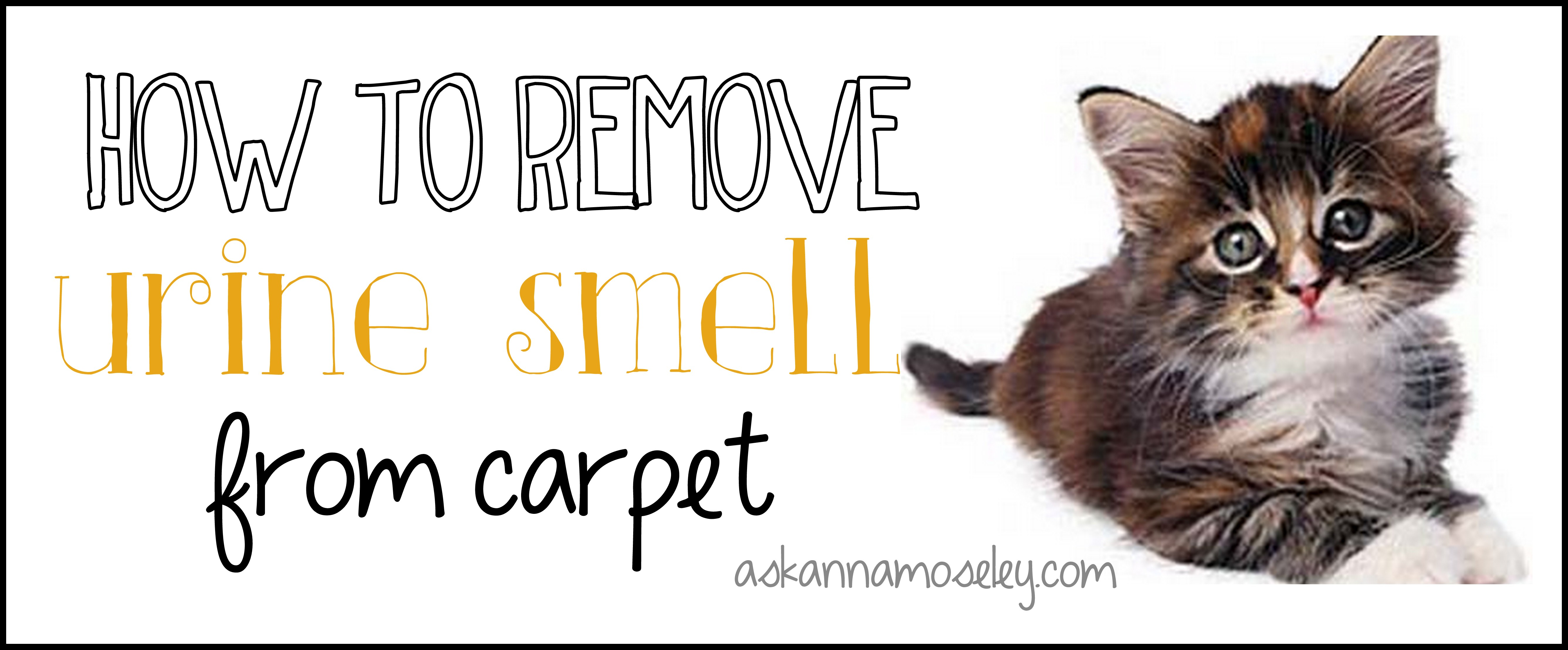Natural Way To Get Rid Of Cat Urine Odor In Carpet Www