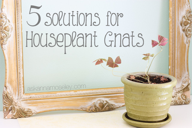 How to get rid of Gnats in the House. How to get rid of Gnats in the House   Ask Anna