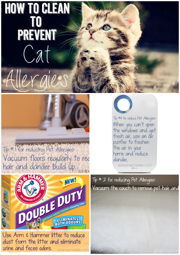 How To Clean To Prevent Cat Allergies Ask Anna