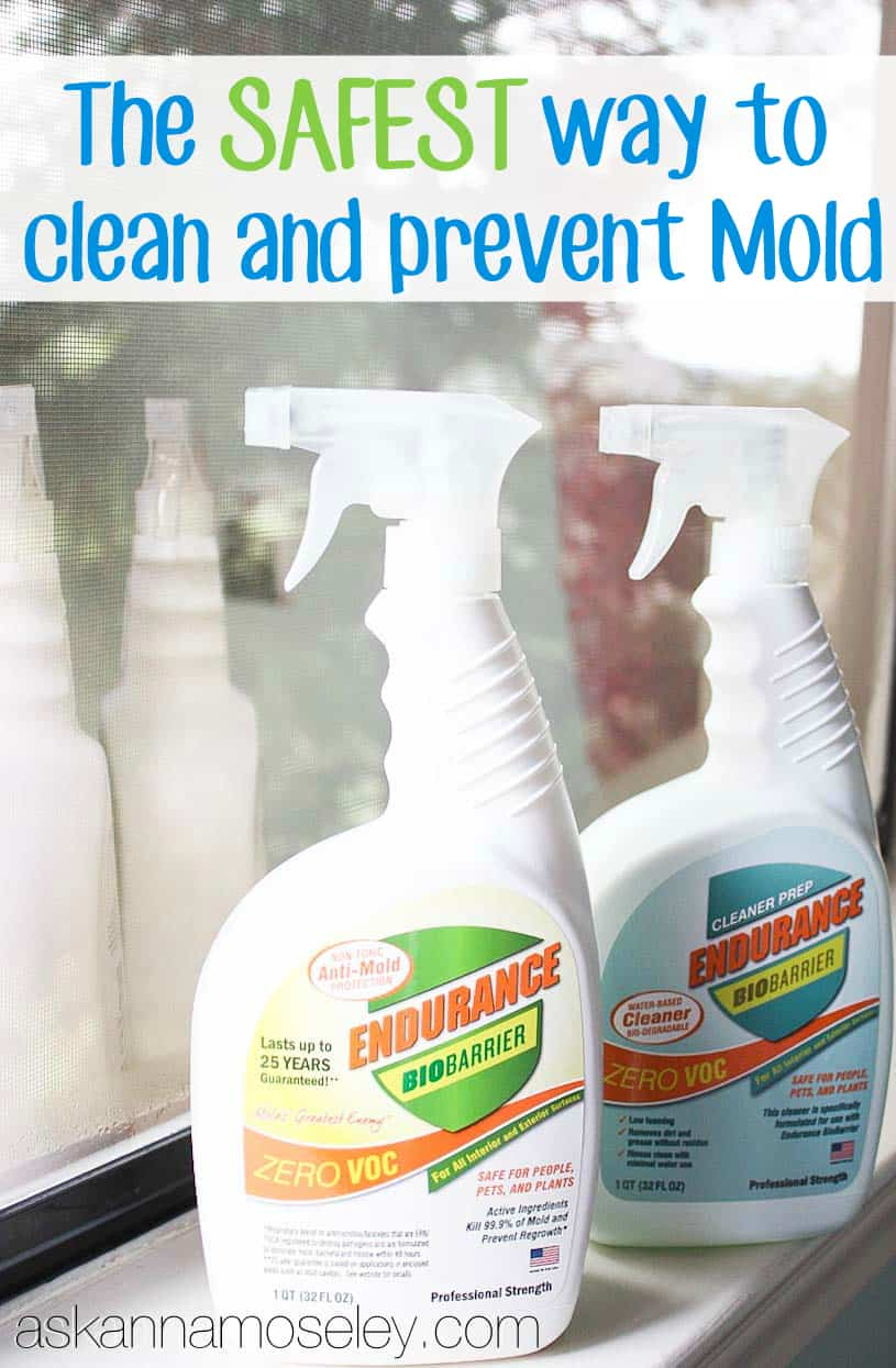 The Safest Way To Clean And Prevent Mold