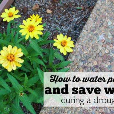 How to Save Water When Watering Plants & a Giveaway!